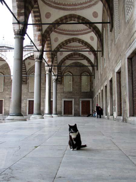 istambul3.jpg